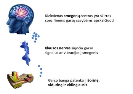 Girdėjimo procesas. Herbarius - vaistažolės internetu